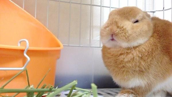 我家兔兔怎麼長得和衛生紙盒一樣方正...   ETtoday寵物動物新聞   ETtoday 新聞雲
