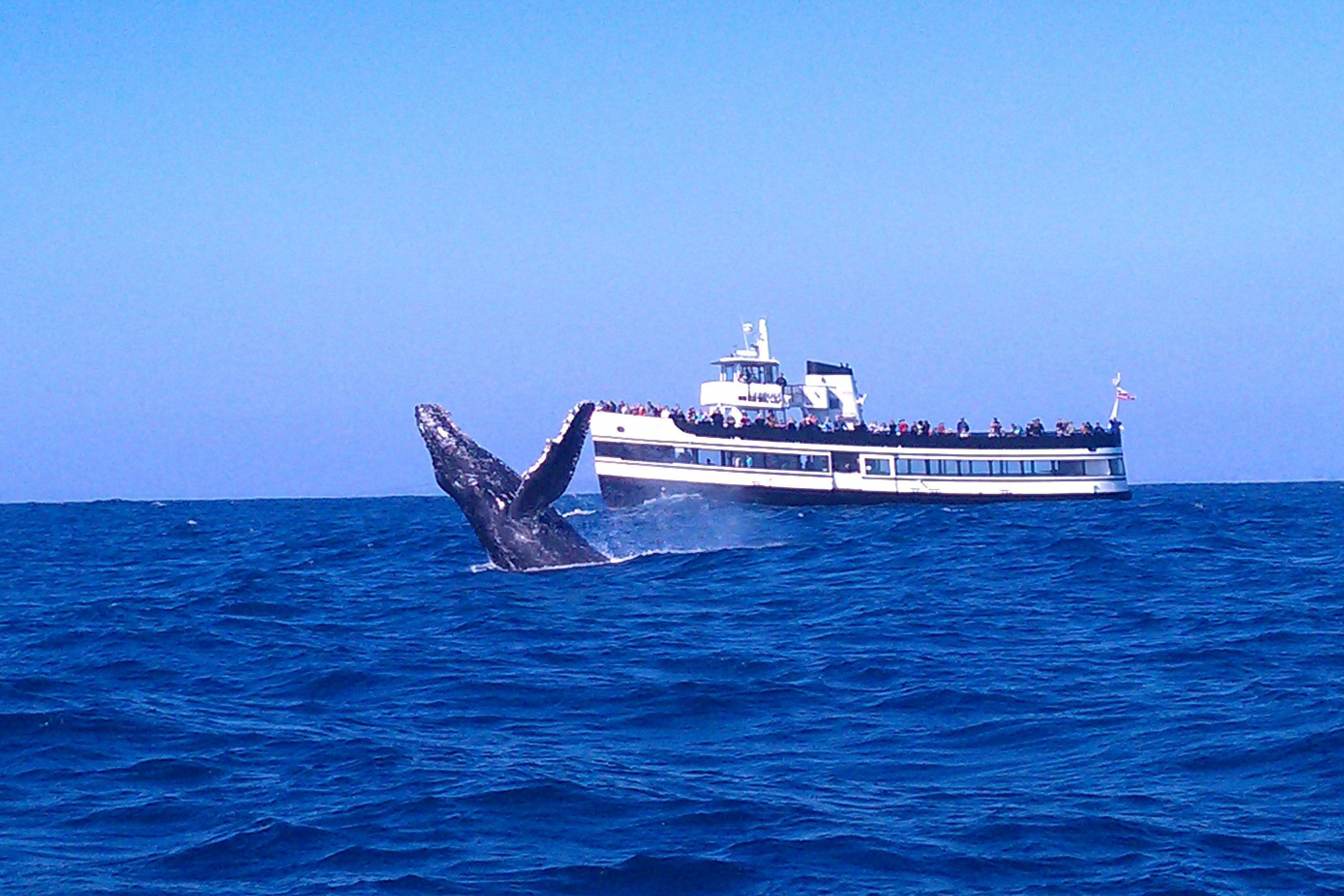 During The Winter Months Numerous Whale Watching Services Offer