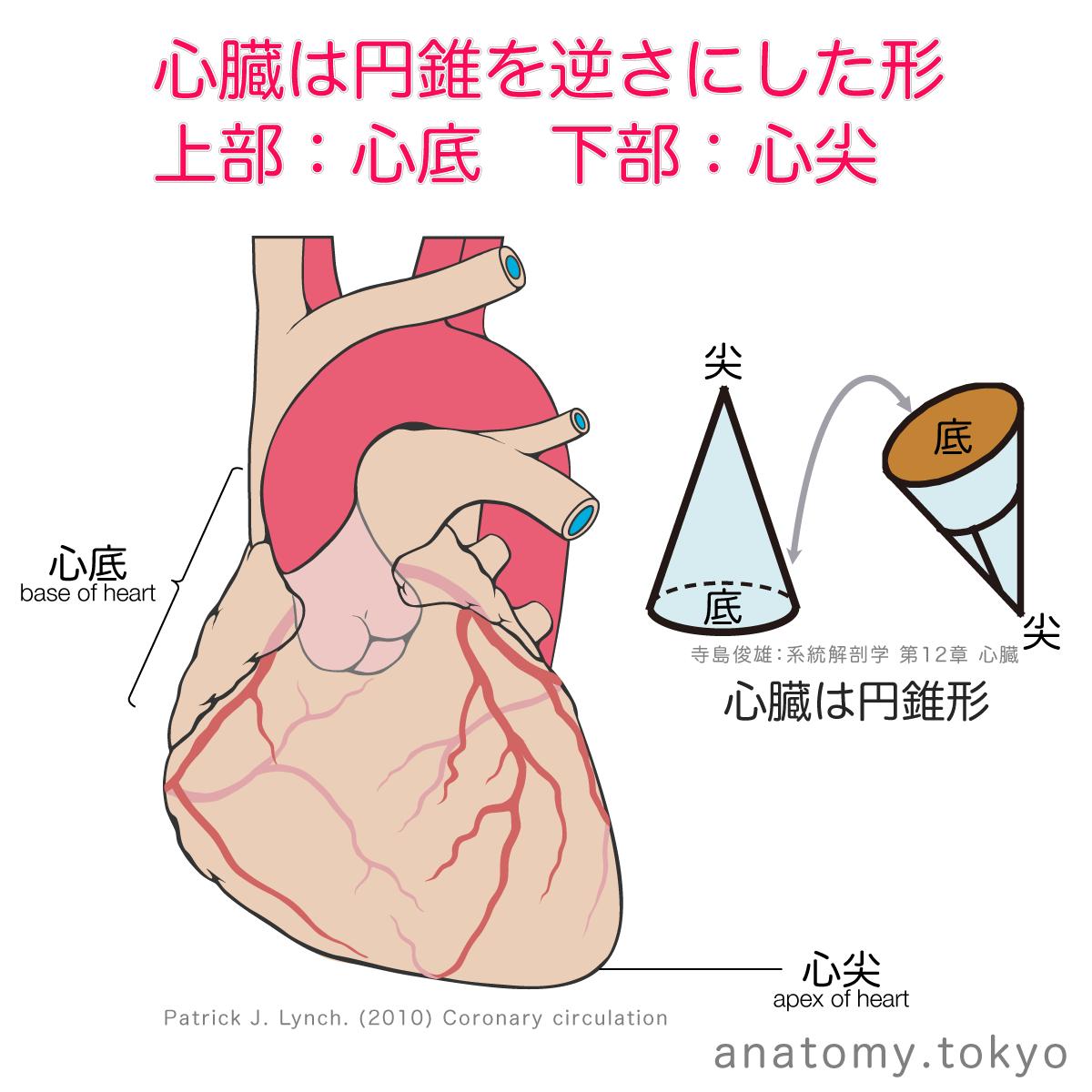 症 ファロー 覚え 徴 方 四