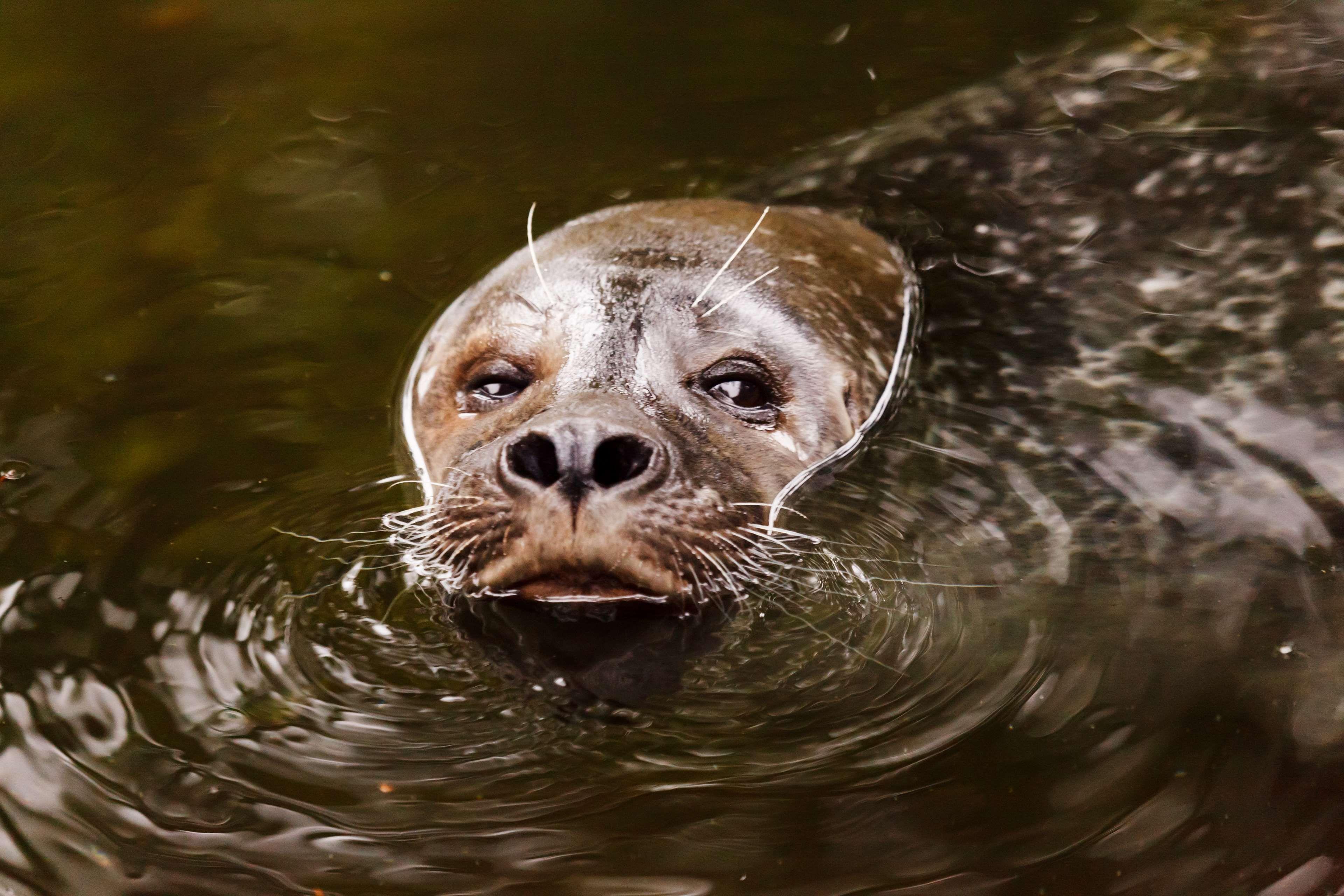 картинки вода для животных пленэр