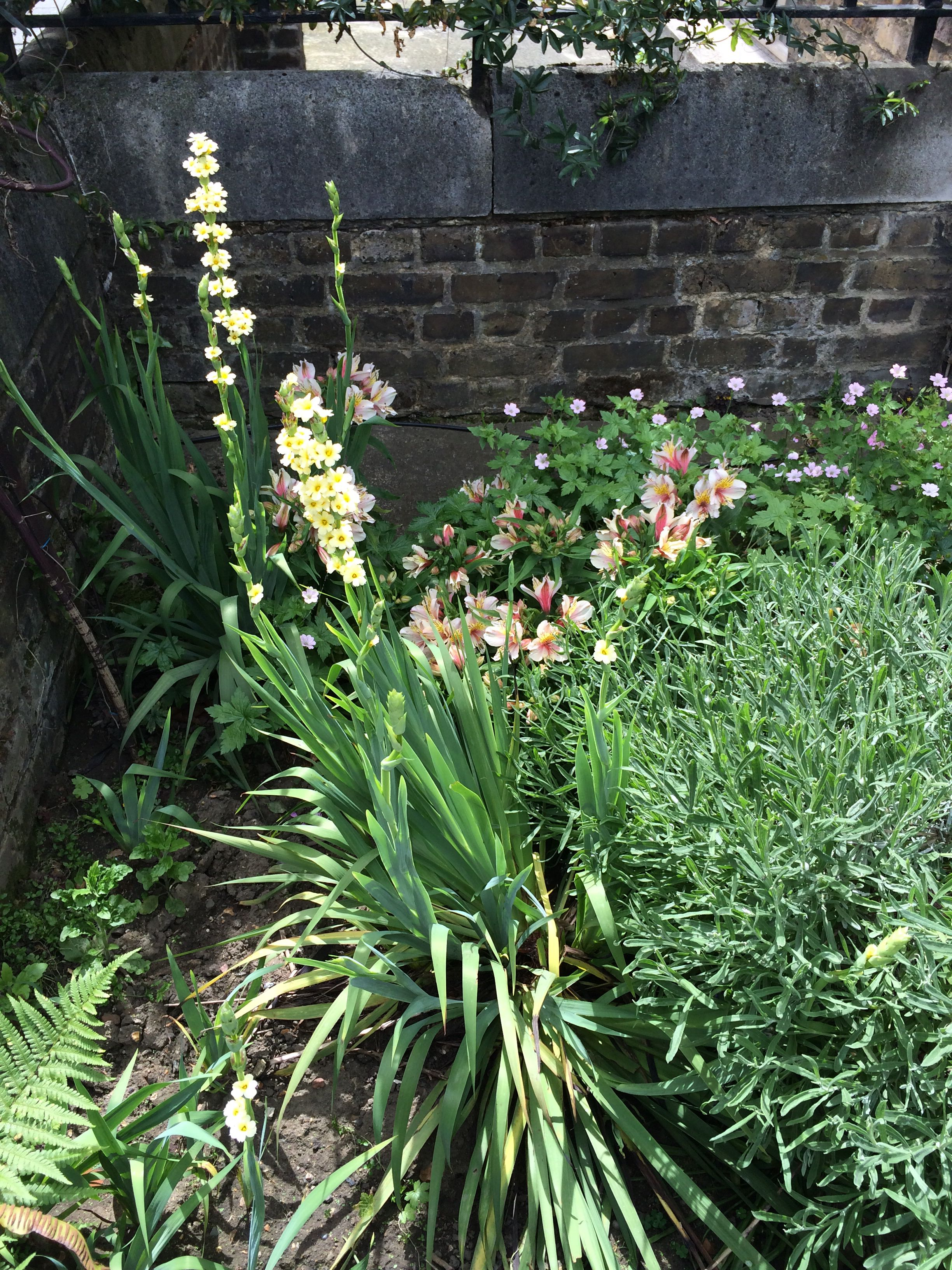 Find Out What These Yellow Flowers Are Anyone Know Flowering Now
