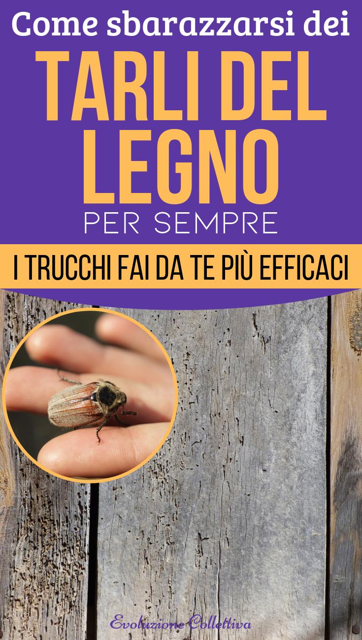 Prodotti Efficaci Contro Le Formiche come sbarazzarsi dei tarli del legno per sempre: i trucchi