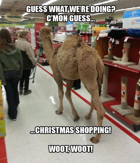 Welcome to Petco With a Camel | Funny | Funny dog pictures, Wtf