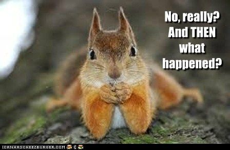 I M Dying To Know Cute Animal Photos Cute Animals Cute Squirrel