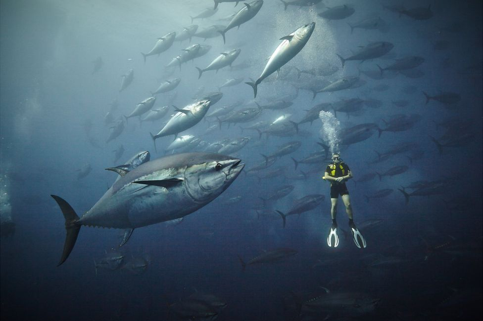 Swimming With Elephants And Sharks Fishing Photography Shark Fishing Adventure