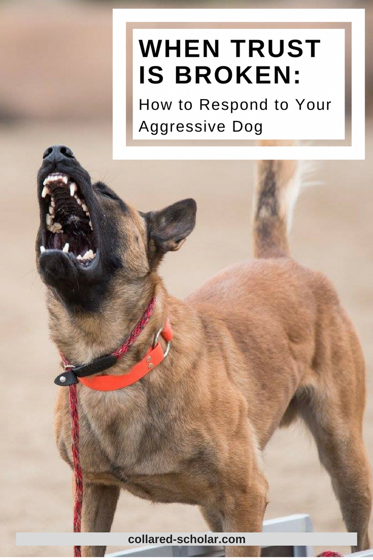 Become The Pack Leader With Images Aggressive Dog Dog Training Aggression Dog Training