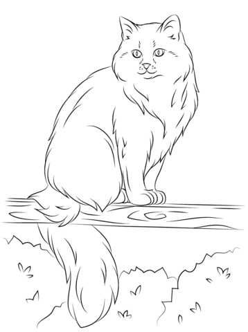 Siberian Cat Sits on A Tree coloring page from Cats