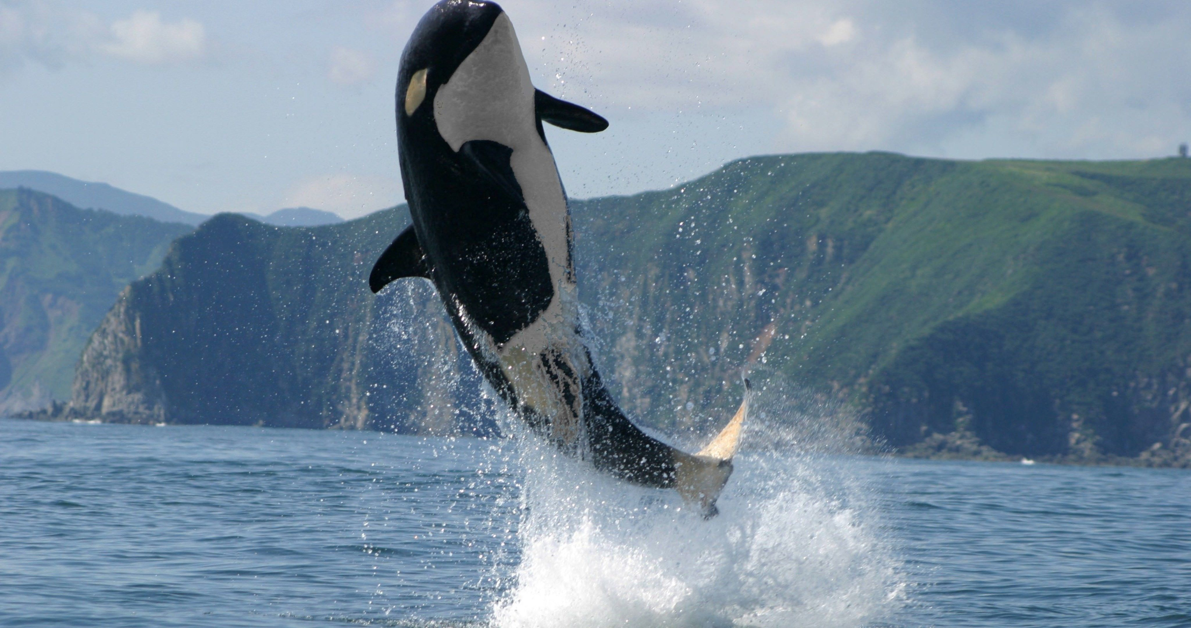 Orca jump 4k ultra hd wallpaper sharovarka pinterest hd wallpaper orca jump 4k ultra hd wallpaper altavistaventures Images