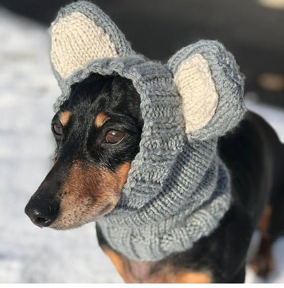 How Funny Is This Dog In His Hand Knitted Winter Hat With Ears