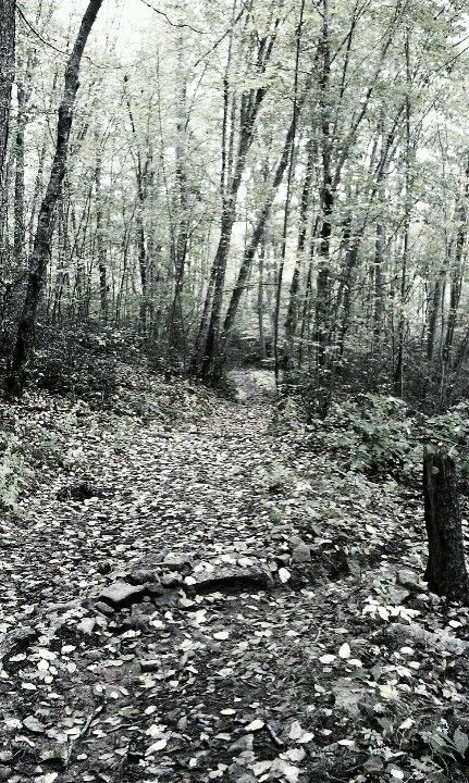 Old Furnace Trail, CT