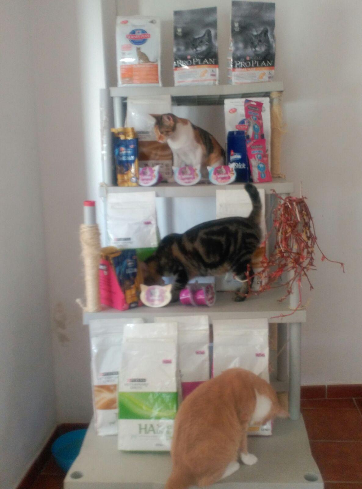 Kiwoko Granada Donacion Al Centro Felino Silvestre De Durcal 16