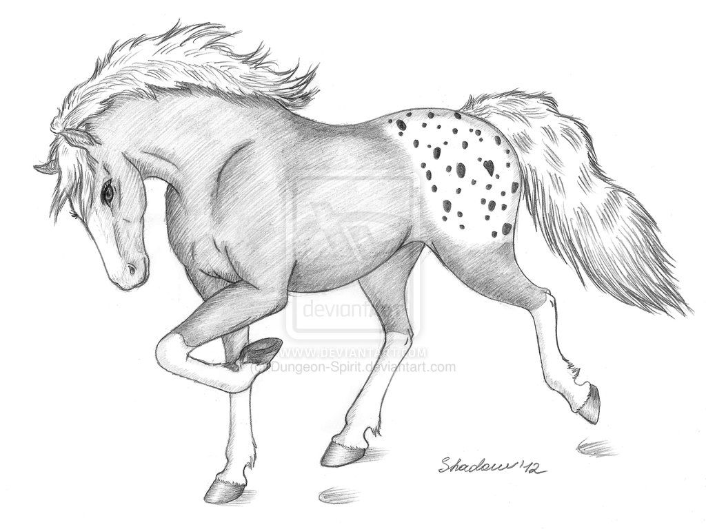 Easy realistic horse drawing info