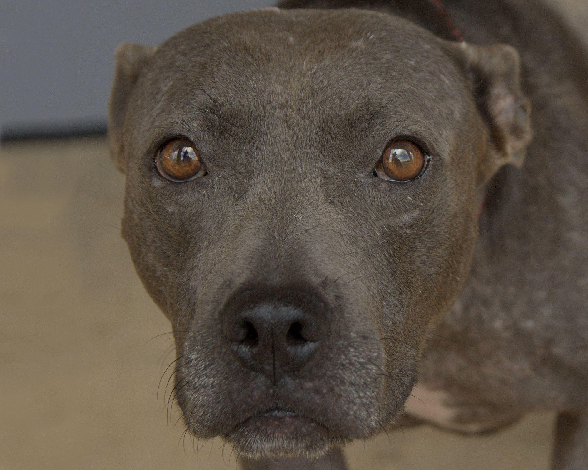 Adopt Ashleagh Blu On In 2020 Dog Care Dog Adoption