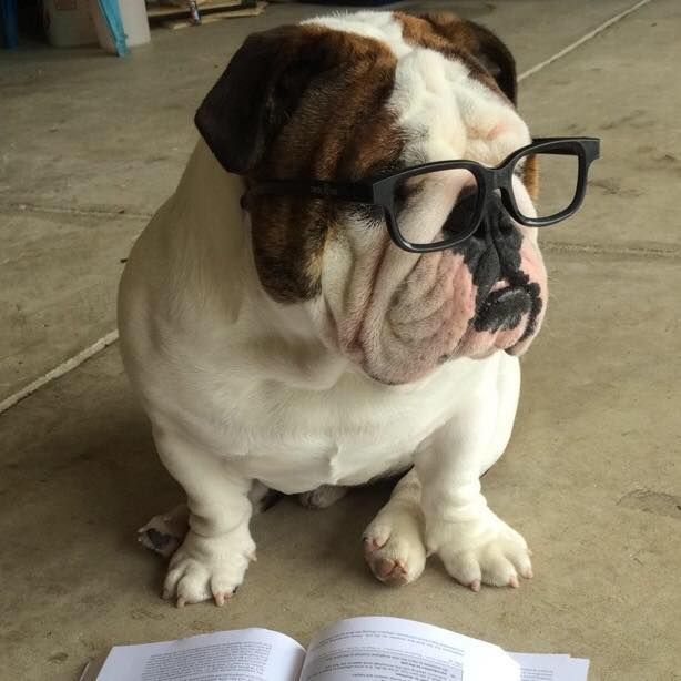Welcome To Drooling 101 I Am Your Instructor Mr Barky