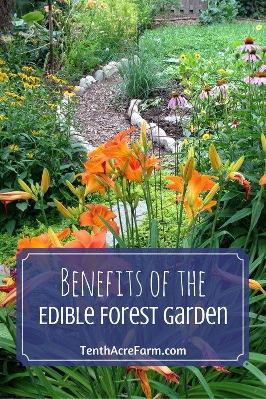 Benefits of the Edible Forest Garden   Pinterest   Backyard ...