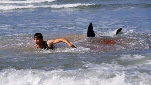 Jordan Lindsey Shark Attack Video