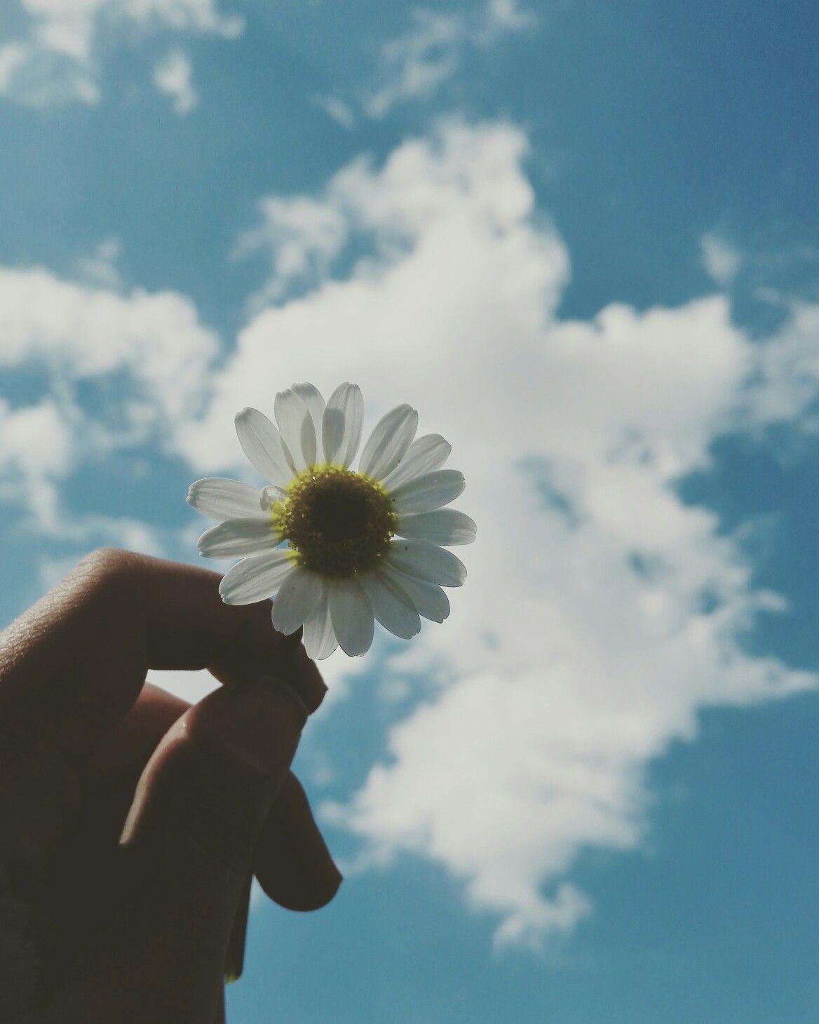 Ngày anh đến bầu trời xanh một màu rất đẹp Hoa Đẹp, Hình Nền Iphone