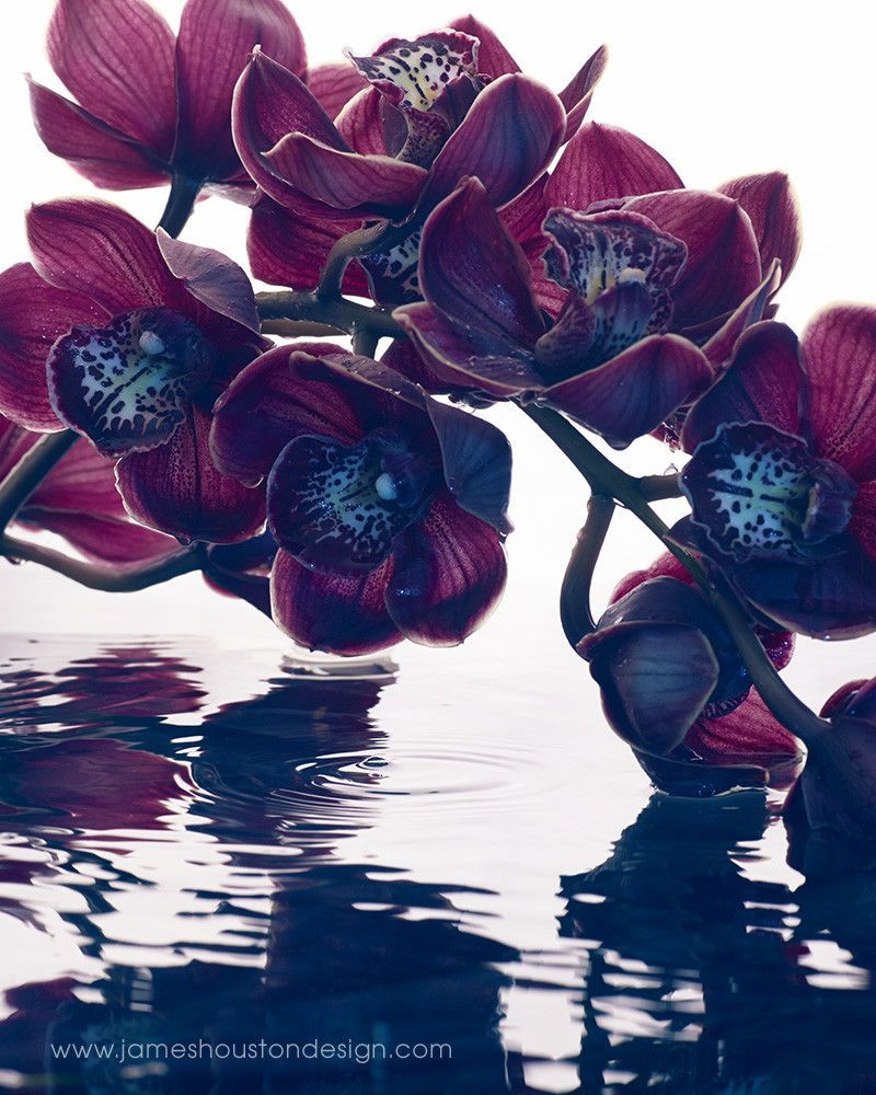 Fluid Flower Series 2, NYC 2014