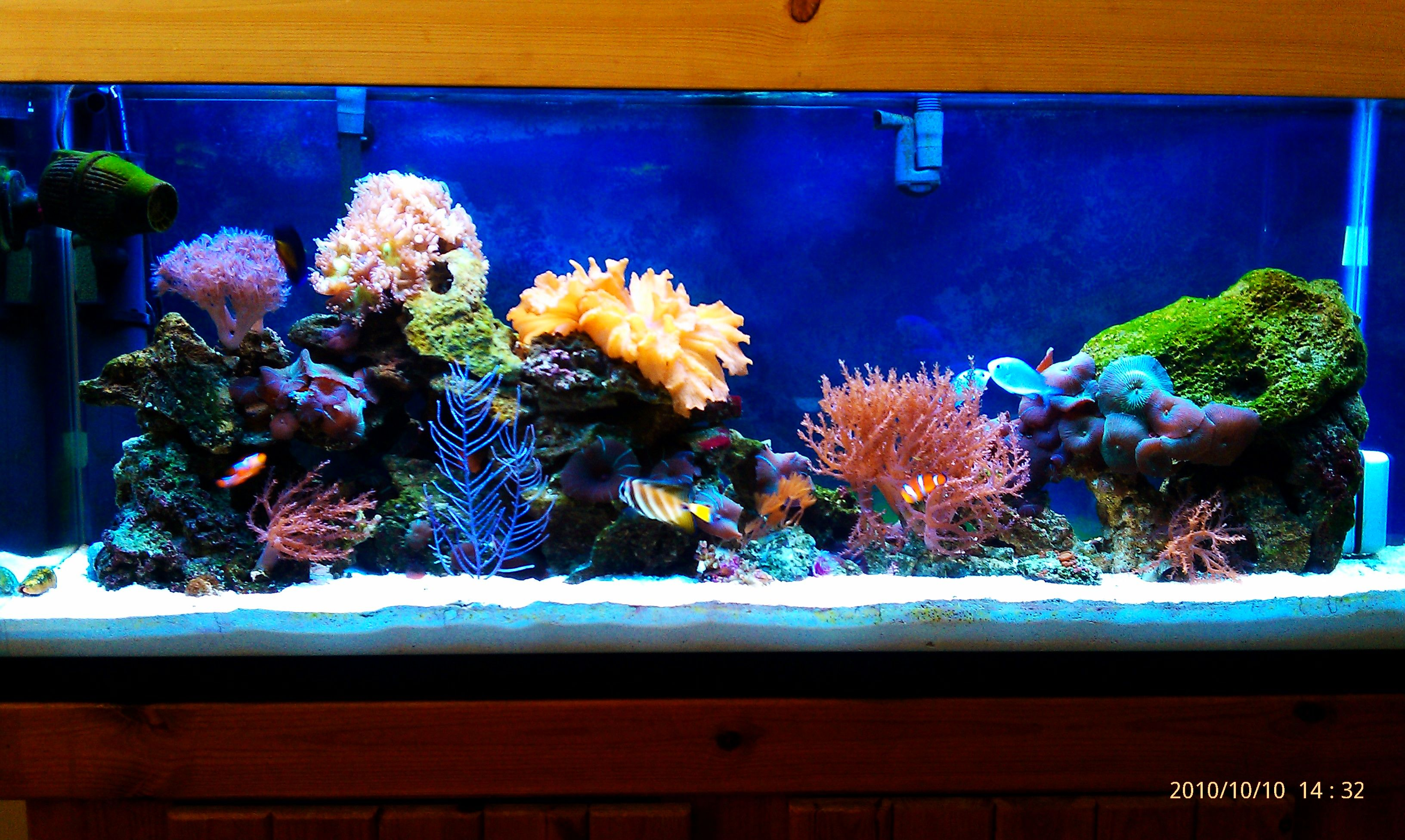 Best tanks from around the world Page 19 Reef Central line
