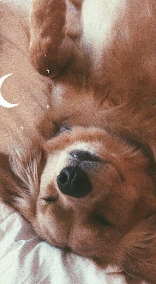Pin By Susan Madyson On My Pretty Nice Board In 2020 Cute Puppy Wallpaper Cute Dog Wallpaper Cute Animals