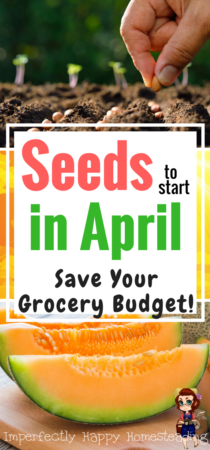 What Seeds You Should Plant In April With Images Veggie Garden
