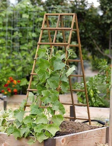 Bildergebnis Fur Gurken Rankhilfe Garten Hochbeet Garten Vertikaler Garten