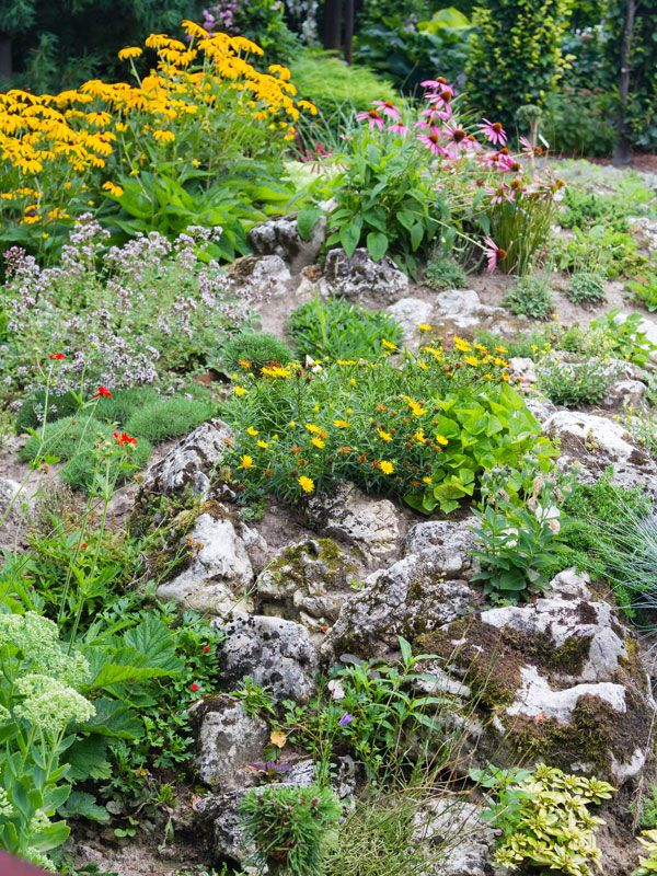 How to build and plant an alpine rock garden alpine for Low maintenance year round plants
