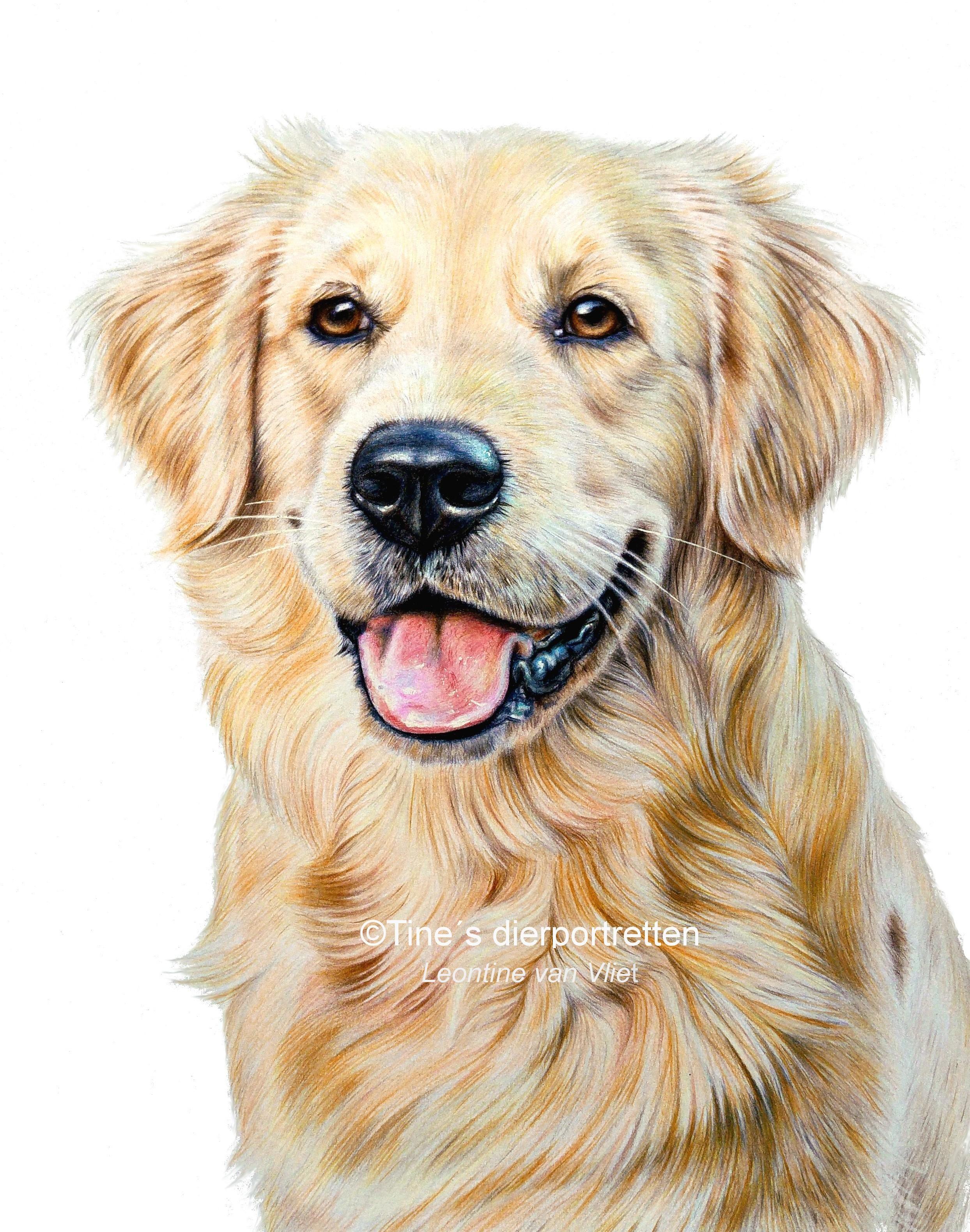 Pin By Regenbogen Art Books On Dogs In 2020 Dog Portrait Drawing Dog Paintings Golden Retriever Drawing [ 3160 x 2488 Pixel ]