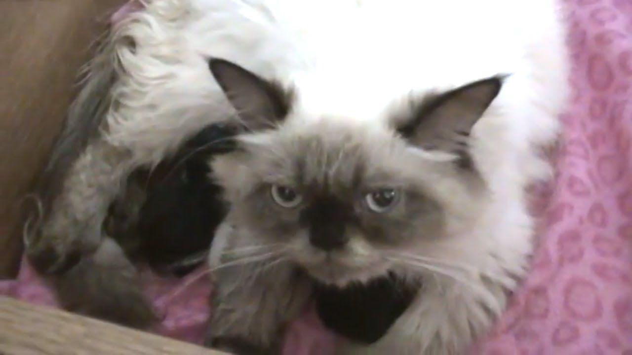Misha Had 4 Kittens Kittens Pets Animal Gifs