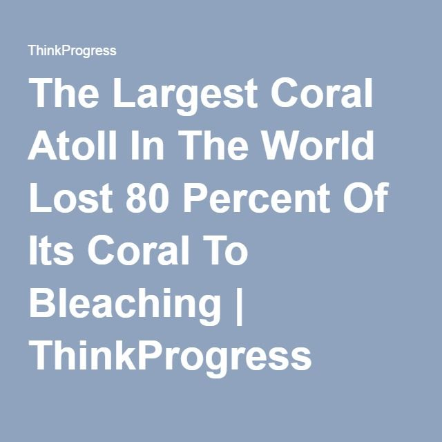 The Largest Coral Atoll In The World Lost 80 Percent Of ...