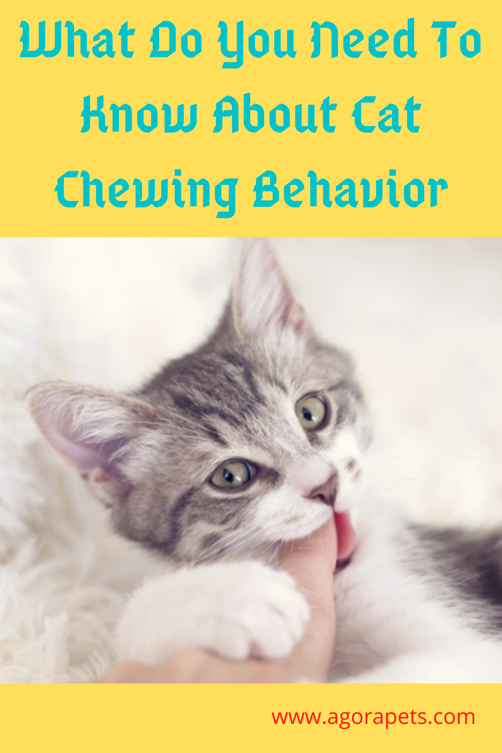What Do You Need To Know About Cat Chewing Behavior in