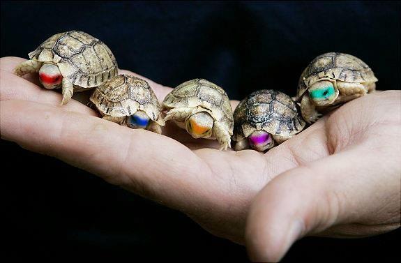 Las tortuguitas para mi hijo....so cute  @Clara Comparini