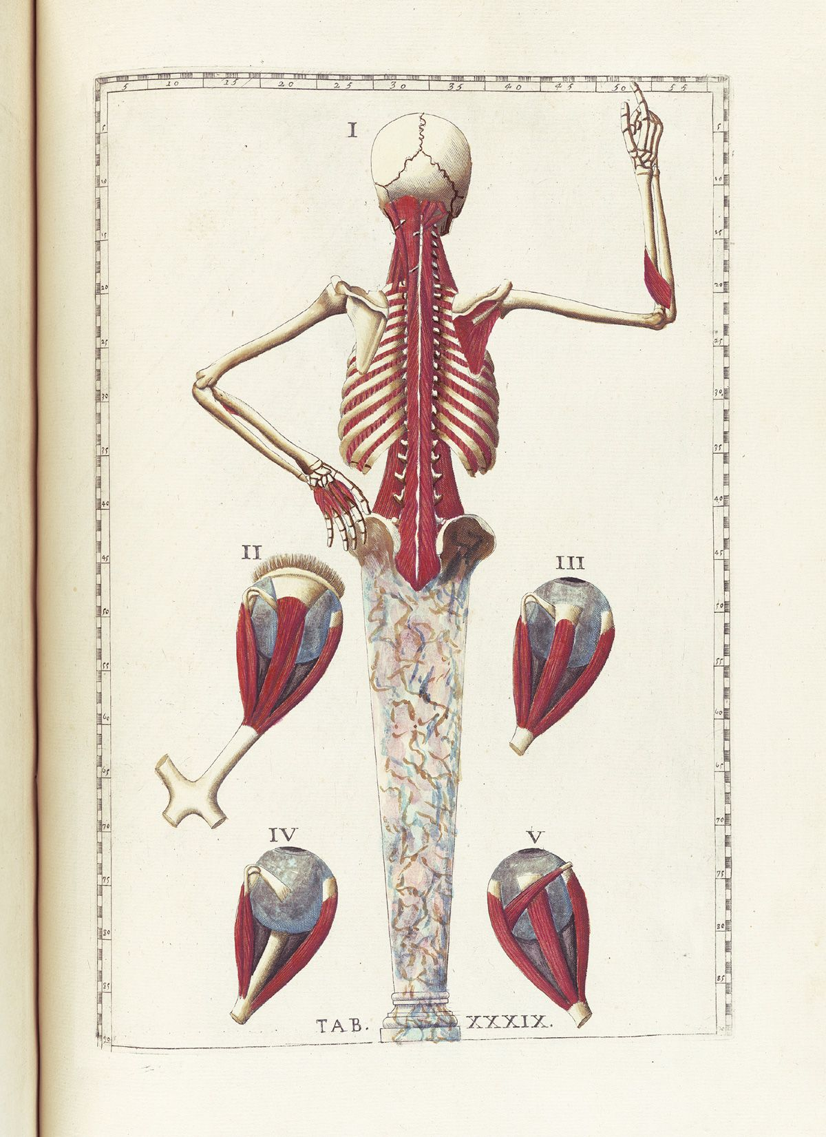 An Alphabet Of Anatomical Emotions And Feelings