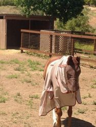 How to properly fit a horse blanket or sheet! visit proequinegrooms.com  http://www.proequinegrooms.com/index.php/tips/equipment-and-tack/checking-for-fly-sheet-and-blanket-fit/