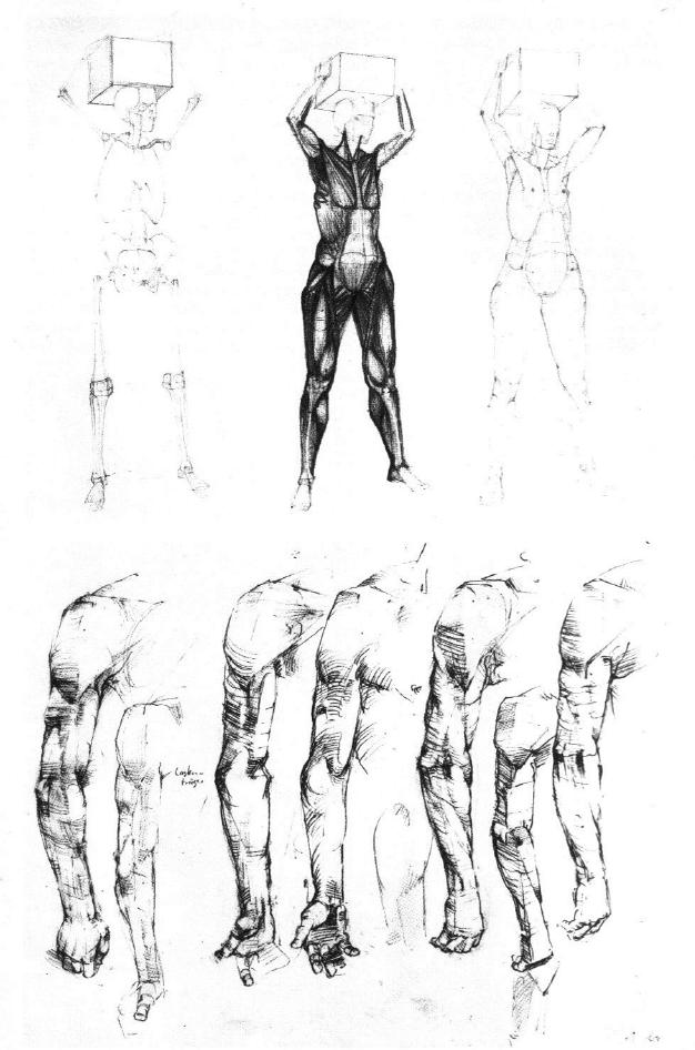 Gottfried Bammes - Der Nackte Mensch   Anatomy Gottfried Bammes ...