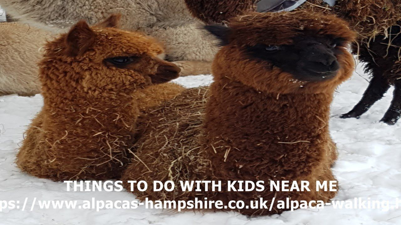 THINGS TO DO WITH KIDS NEAR ME Fun attractions near me