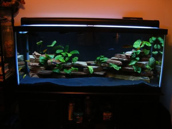 Clean black sand with green plants and bright light for Fish tank sand