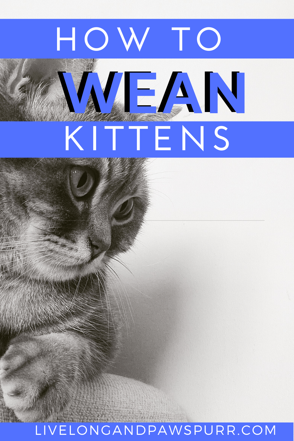 How To Wean Kittens Off Of A Bottle In 2020 Kitten Care Weaning
