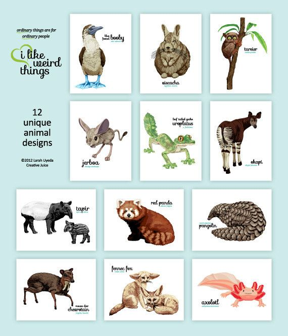 ORDINARY things are for ORDINARY people ... as for me, I like weird things!!  This boxed set of 12 notecards features 12 unusual animal designs: blue footed booby, viscacha, tarsier, jerboa, leaf tailed gecko (uroplatus), okapi, tapir, red panda, pangolin, chevrotain, fennec fox and axolotl.