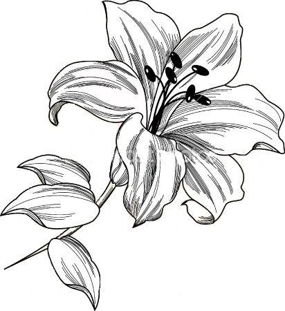 lily tattoo body art pinterest blumen vorlage. Black Bedroom Furniture Sets. Home Design Ideas