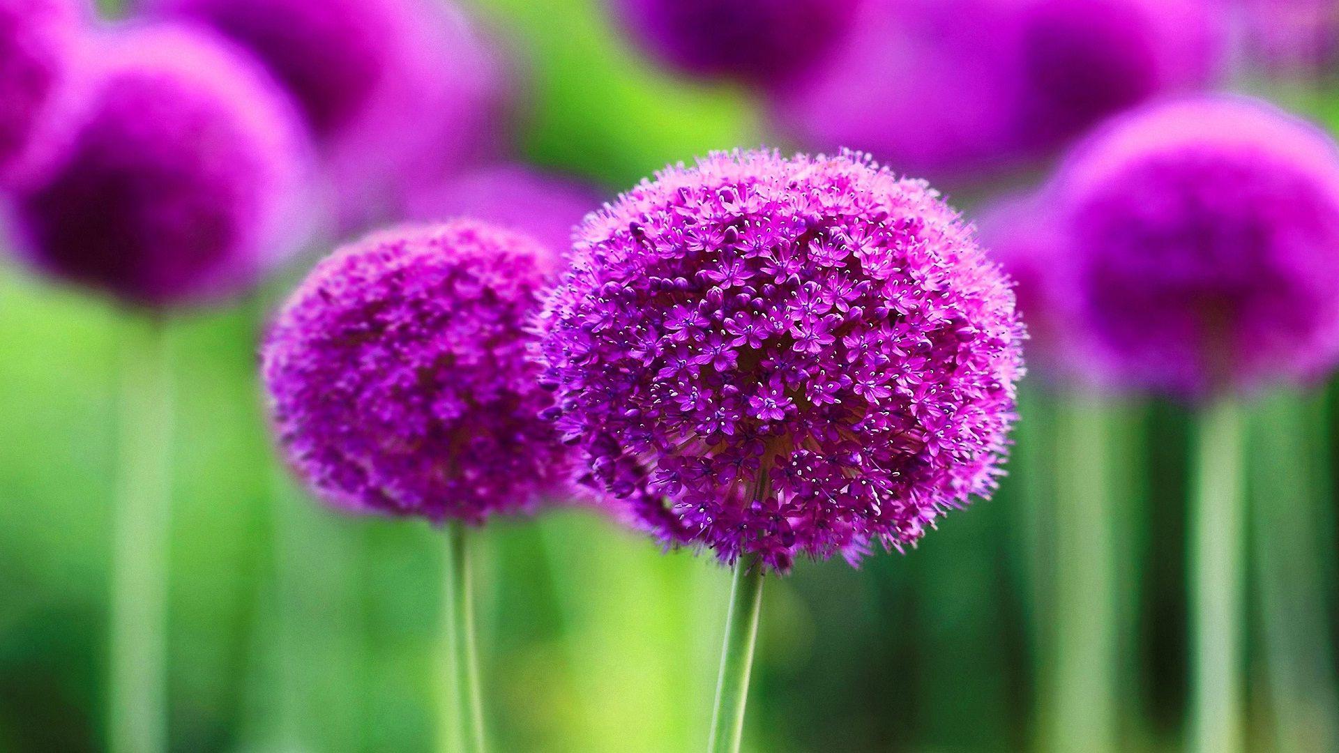 Flower Wallpaper Beautiful Purple Wallpapers High Quality
