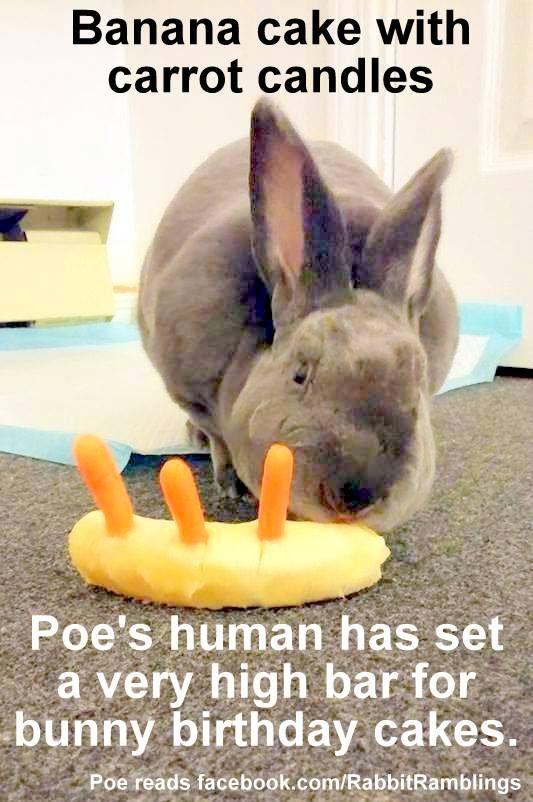 Items Similar To Happy Birthday Rabbit Cake Card On Etsy Happy Birthday Bunny Funny Happy Birthday Wishes Happy Birthday Signs
