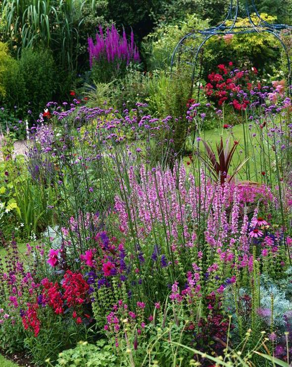 Border control Alan Titchmarsh on growing Salvias in your garden is part of garden Borders Purple - ACCOMPANIED by silverfoliage plants such as artemisia, and mixed with diascias and penstemons, you will find that any sundrenched spot can be turned into a hugely colourful feature that can be fitted into the smallest of gardenssays Alan Titchmarsh