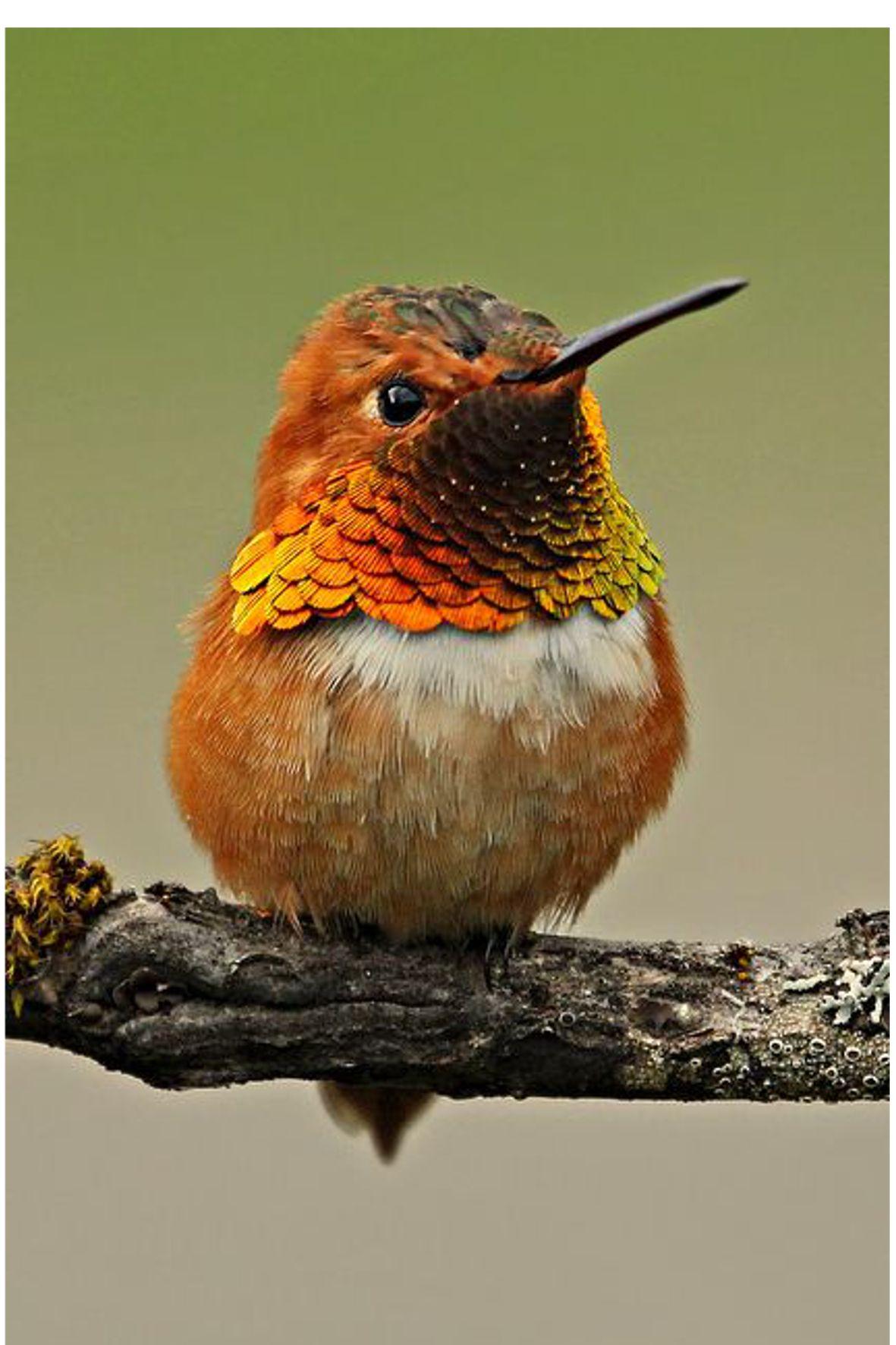 Mosaïque oiseau mosaïque small bird bird mosaic range