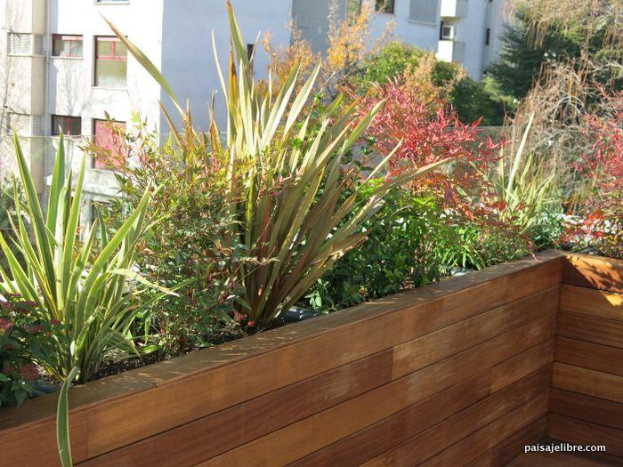 Las 6 Mejores Plantas De Sol Para Terrazas Y áticos