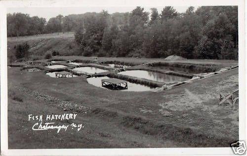 Fish Hatchery Chateaugay Adirondacks N Y RPPC   eBay   Chateaugay