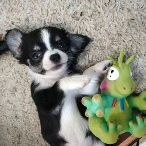 He is the cutest puppy I have ever seen..ahhh!!