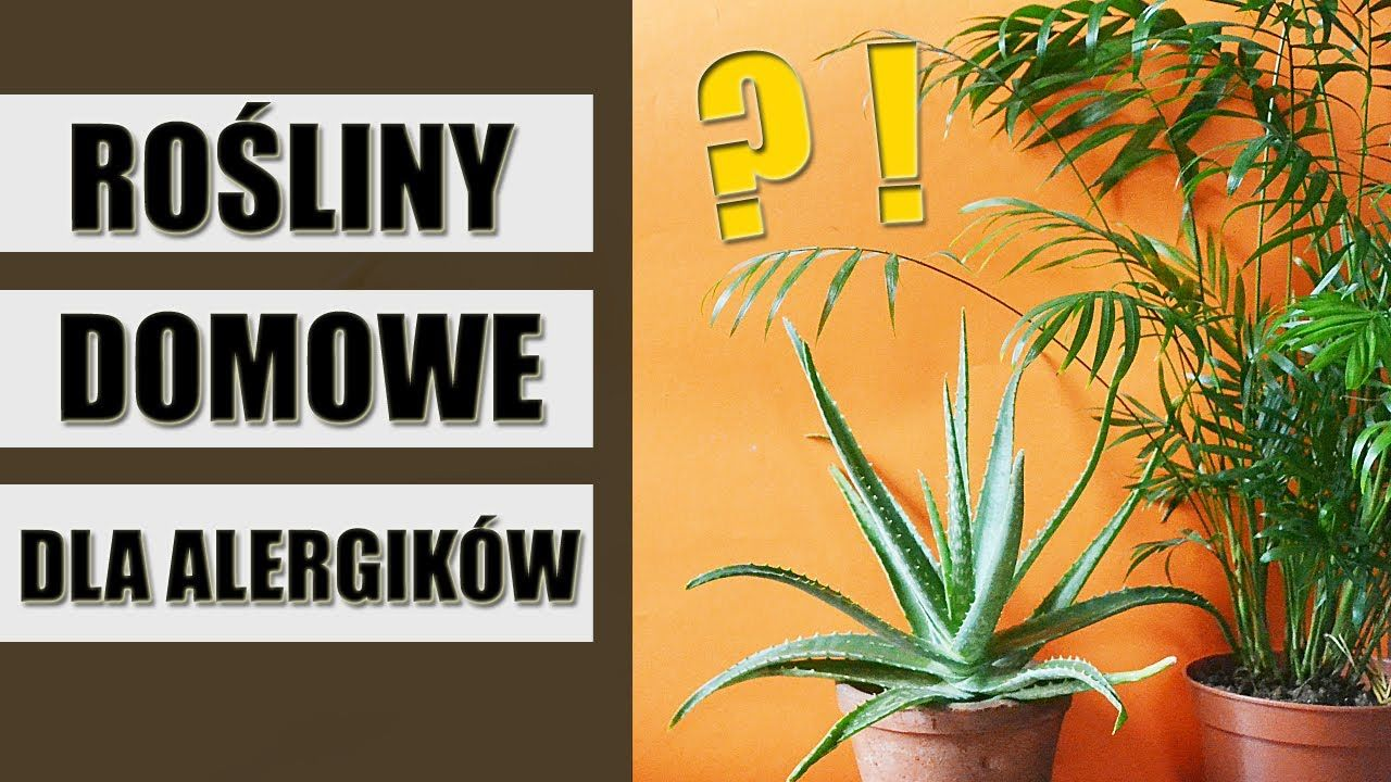 Rosliny Doniczkowe Dla Alergikow Plants Home Decor Decals Home Decor