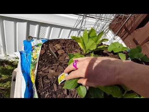 Growing Vegetables In Potting Soil Bags Growing 400 x 300