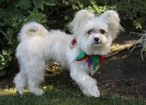 Adopt Lars On Petfinder Pet Adoption Event Pet Adoption Dog Adoption